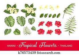 Set of tropical flowers elements. Collection of flowers on a white background