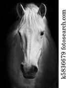 White horse's portrait