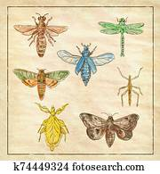 Vintage Moth, Dragonfly, Mantis and Stick Insect Collection on Antique Paper