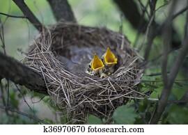 Μεγάλο πουλί σε μικρή γκόμενα