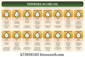 Terpenes in CBD Oil horizontal textbook infographic