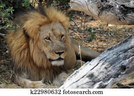 Cecil Resting