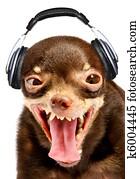 Ridiculous dog DJ.