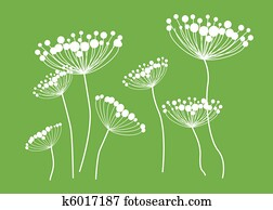 Queen Anne Lace Drawing
