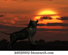 The wolf on sunset