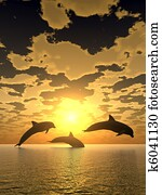 dolphin yellow sunset