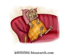 happy dog on sofa