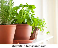 Rosemary, Basil and Mint in Pots