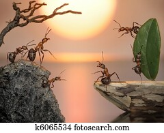 team of ants sailing back home, fantasy