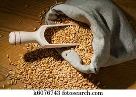 Grains of oats