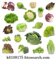 cabbage and green vegetable collect