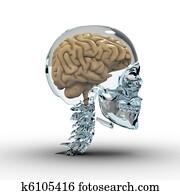Glass Skull with Brain