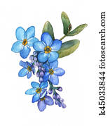 Forget-me-not flowers bouquet isolated on white background. Watercolor illustration of a blue wild flower.