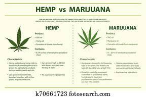 hanf, vs, marihuana, horizontaler, infographic