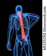 male backache