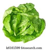 Boston Lettuce