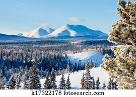 Taiga winter snow landscape Yukon Territory Canada