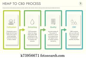 Hemp to CBD Process horizontal business infographic