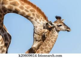 Wildlife Animals