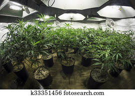 Indoor Marijuana Grow Room