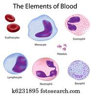 The cells of blood