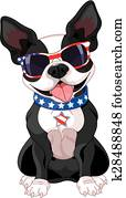 4. july, boston terrier