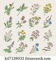 Botanical herbs and flowers. Hand drawing pictures isolate on white background