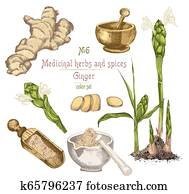 Set colorful hand drawn of Ginger roots, lives and flowers isolated on white background.