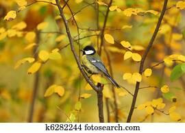 Φωτογραφίες από μεγάλο πουλί λεσβιακό μαύρο και λευκό