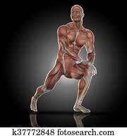 3D render of a medical figure with muscle map doing stretches