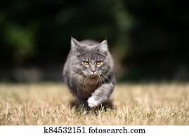 cat walking outdoors on dried grass