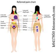 referred, schmerz, chart,, eps8