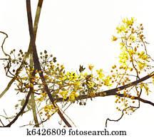 Blossom Art on White Background