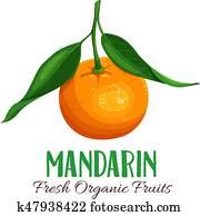 Vector mandarin illustration