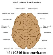 Brain functions, eps8