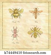 Bumble Bee, Wasp, Stag Beetle and Queen Bee Vintage Collection