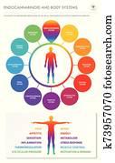 endocannabinoid, und, koerper, systeme, senkrecht, geschaefts, infographic