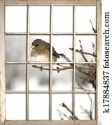 Old Window Pane - Bird