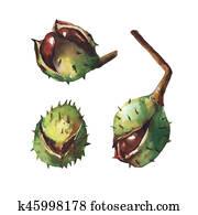 Set chestnut with crust.