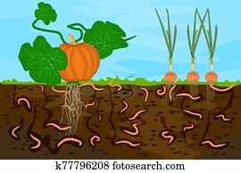 Ground cutaway with earthworms and vegetable.
