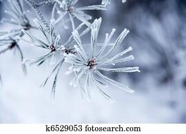 Needles in winter