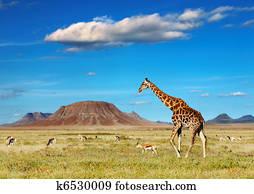 afrikanisch, safari