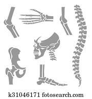 menschlich, gelenke, vektor, set., orthop?disch, und, rückgrat, symbole