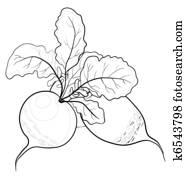 Radish with leaves, contours