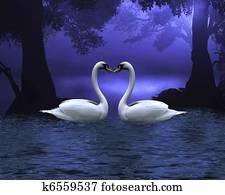 Swan Scene at Evening