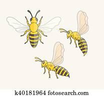 hornisse, insekt