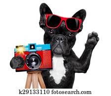 photographer dog camera