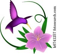 kolibri, und, lily,, freigestellt