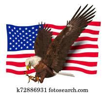 Bald Eagle American Symbol