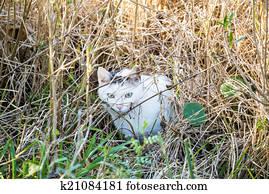 Feral Cat in Wetland Marsh